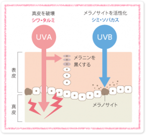 有害な紫外線UVAとUVB